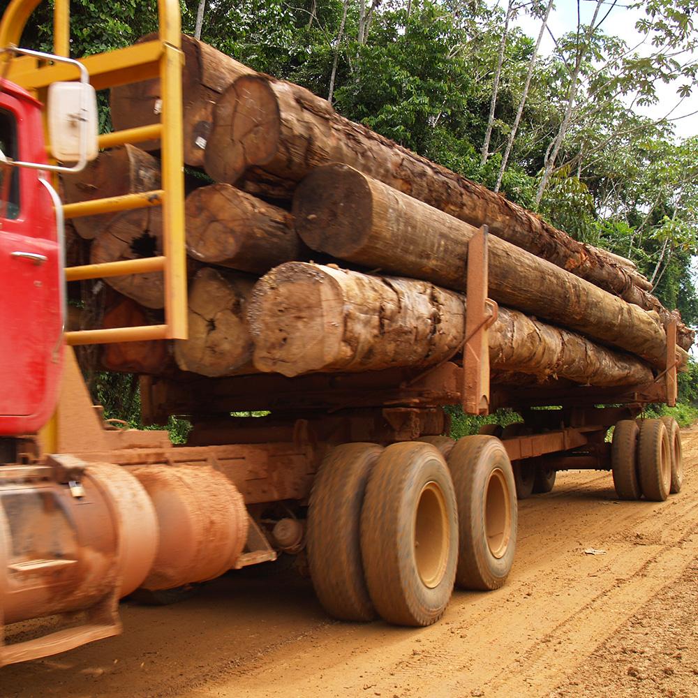 Transport van hardhouten stammen fsc.