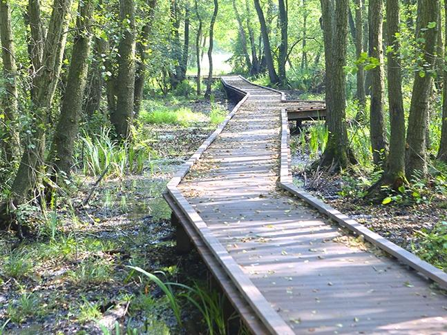 Hardwood floorbridge through the forest